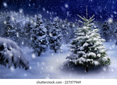 Outdoor night shot of a nice fir tree in thick snow, for the perfect Christmas mood