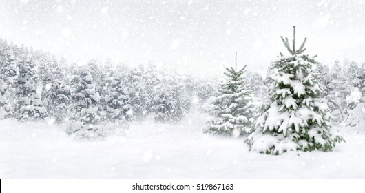 Outdoor panorama shot of two young fir trees in thick snow at the edge of a forest, for the perfect Christmas mood