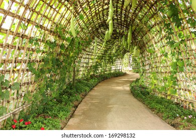 Outdoor Park over a squash Archway in the garden