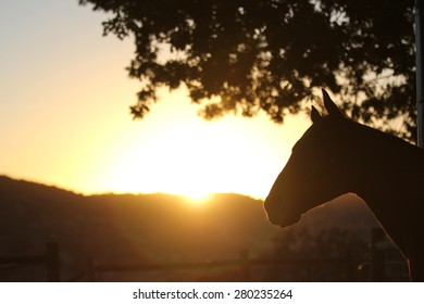 An outdoor photograph of a horse silhouette with the sun setting in the background.