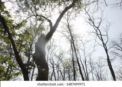 Outdoor Photography, Barvi Dam, Badlapur - Shutterstock ID 1487499971