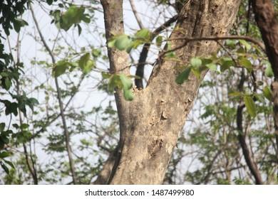 Outdoor Photography, Barvi Dam, Badlapur - Shutterstock ID 1487499980