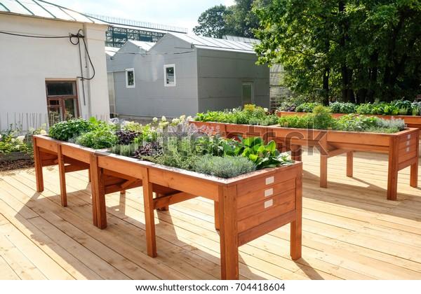 Outdoor Planting Table Herb Gardening Garden Stock Photo ...