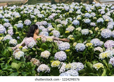 Outdoor portrait of a beautiful middle aged woman walking in Hydrangea macrophylla field or Hortensia flower in a garden. Model attractive sexy girl with Boho style clothing in a field with flowers