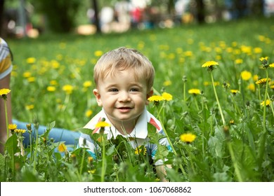 outdoor portrait of a little boy. walking child in a summer park on the grass with yellow dandelions