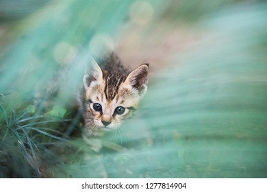 Outdoor portrait of tabby kitten, out of focus leaves in the forground