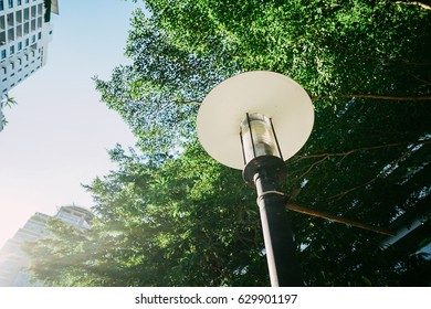 Outdoor Post Light and Tree Branch