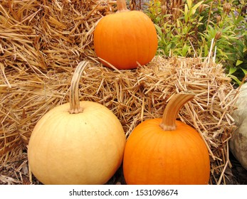 Outdoor pumpkins and hay decorations during the fall season.