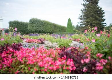 Outdoor shot of flowers shrubs