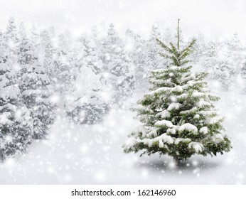 Outdoor shot of a nice little fir tree in thick snow, for the perfect Christmas mood