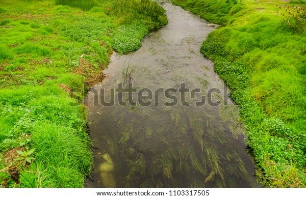Outdoor view of small creek flowing in the ground of a land