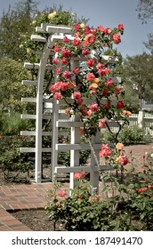 Outdoor white garden trellis with live roses growing over a brick pathway.