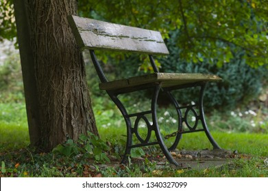 Outdoor wooden bench with cast iron frame stands in a park under a tree