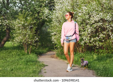 Outdoors lifestyle portrait of beautiful young woman smiling, enjoying of the blooming apple tree on a sunny day. Walking with small cute dog. Wearing stylish sunglasses,  pink hoodie, short shorts.