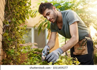 Outdoors portrait of young attractive bearded hispanic man in blue t-shirt and gloves working in garden with tools, cutting leaves, watering plants. Countryside life