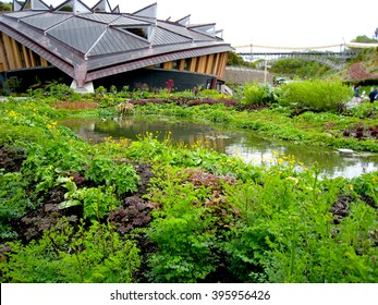 Outdoors Wetland Planting Landscaping - Eden Project, England