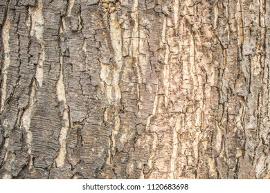 an outer layer of a woody plant