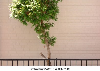 Outer wall siding and tree