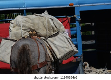 Outfitter's gear packed on a mule.