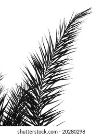 Outline silhouette of a large palm branch