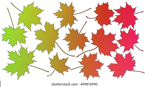 Outlined multicolor silhouette of maple leaves on white background