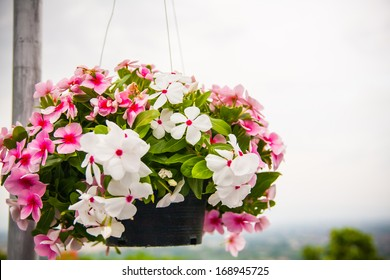 An outside basket filled with vibrant multicolored petunias flower.