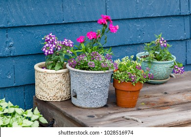 Outside planters filled with alyssum, verbena and dianthus.