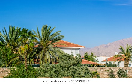 outskirts villa with palm trees garden living apartment house somewhere in Israeli desert warm natural environment