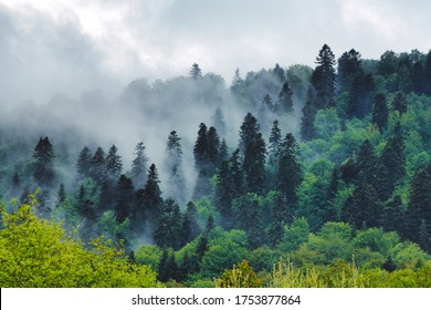 Outstanding 8k panoramic view of Carpathian forest and mountains in spring. Treetops covered by morning mist. Bieszczady, Poland.
