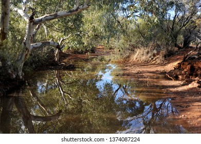 Outstanding Reflections of a Ghost Gum in a small pool in Australia's Desert.