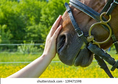 An outstretched hand makes a friendly gesture to a horse by stoking it's head