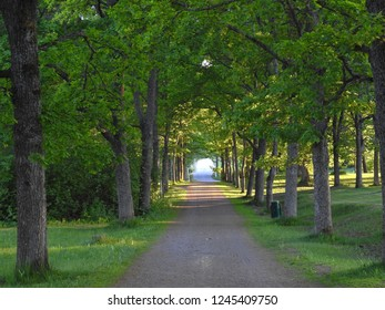 Over hanging trees form a green tunnel
