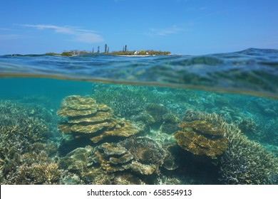 Over under sea surface, Canard island and an healthy coral reef underwater split by waterline, New Caledonia, Noumea, Grande Terre, south Pacific ocean, Oceania