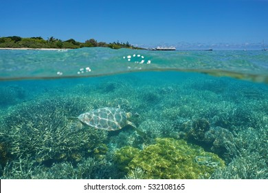 Over and under the sea, a turtle underwater on a coral reef and island with a resort above the surface, Maitre islet, Noumea, New Caledonia, south Pacific ocean