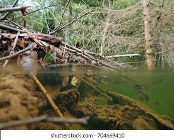 Over- and underwater view of a beaver building by a stream