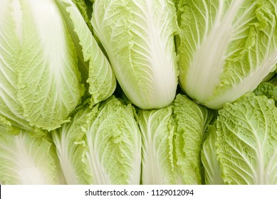 overall background of seven light green heads of Napa cabbage