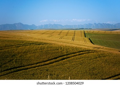 Overberg region, hills and valleys, Cape, South AFrica