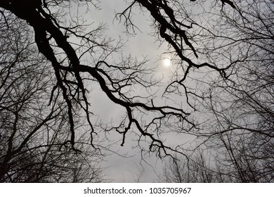 Overcast sky through dark silhouette leafless tree trunks and branches.