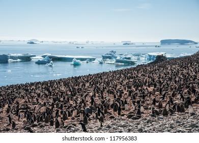 Overcrowded island, lots of gentoo penguins. Antarctica