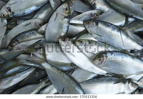 Overfishing fish background