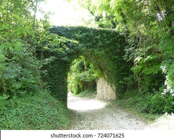 overgrown archway ivy