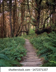 Overgrown boardwalk with ferns between Long Beach and Combers Beach in Pacific Rim National Park near Tofino, British Columbia, Canada