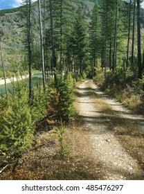 Overgrown dirt road running along river in forest in Montana.
