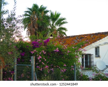 Overgrown farm house in rural Andalusian countryside