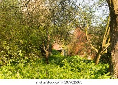 Overgrown garden foliage image