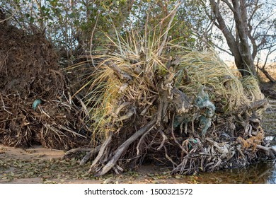 Overgrown with grass, old tree roots on the shore