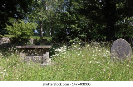 Overgrown graveyard. Old graves and headstones are becoming buried by wild grass and vegetation in this ancient burial plot.