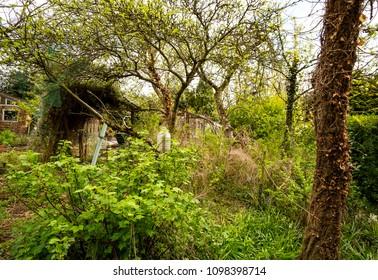 Overgrown messy neglected garden image