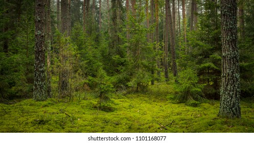 overgrown mossy forest