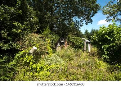 Overgrown neglected garden background image